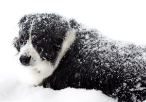 Recognising hypothermia in dogs