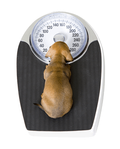 The importance of weighing your dog