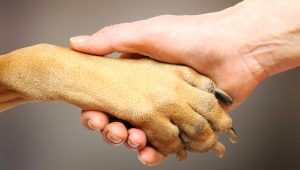 dog-paw-facts-300x170