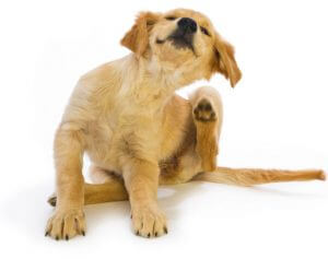 Reasons for your dogs skin ailments