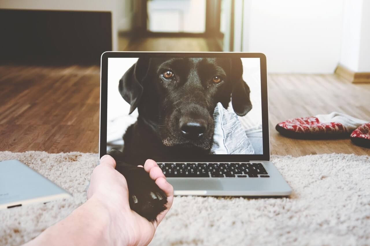 Why you (and your dog) should follow us on social media