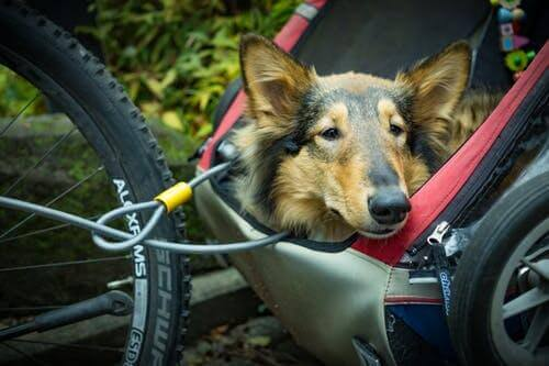 Cycling with your dog!